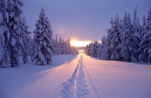 53562-Snow-Tracks-And-Sunshine